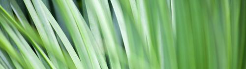 SepSol Environmental Solutions Gas Neutralization